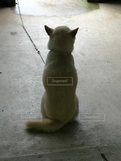 犬の写真・画像素材[241178]