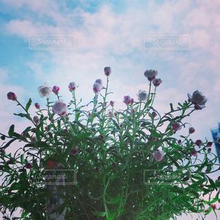 私の小さな空の写真・画像素材[2047276]