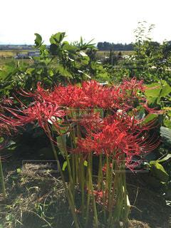 植物の赤い花 - No.870731