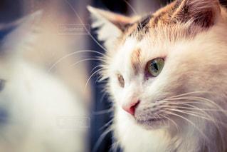 近くに猫のアップの写真・画像素材[966585]