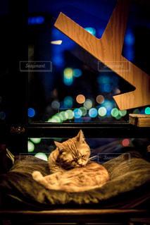 暗い部屋で眠っている猫の写真・画像素材[966587]