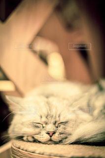 近くに眠っている猫のアップの写真・画像素材[966588]