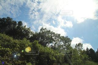 自然の写真・画像素材[241538]