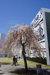 桜の写真・画像素材[1156952]