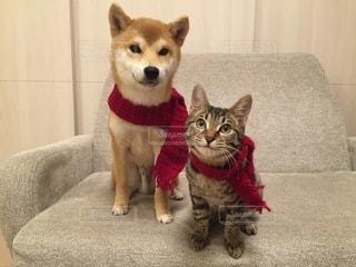 No.9854 犬