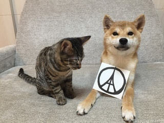 No.9830 犬