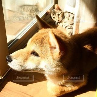 犬 - No.9820