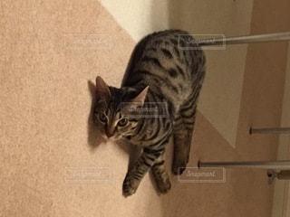 No.9811 猫