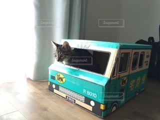 No.9785 猫