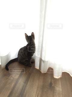 猫 - No.9772