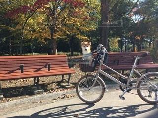 犬,公園,紅葉,自転車,散歩,ペット,お座り,可愛い,柴犬,サイクリング