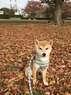 No.8844 犬