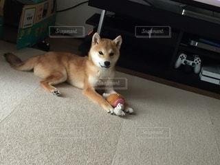No.8843 犬
