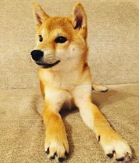 No.8842 犬