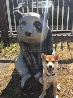 No.8829 犬