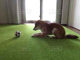 No.8821 犬