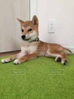 No.8809 犬