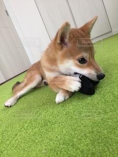 No.8804 犬