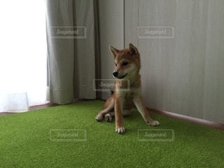 No.8802 犬