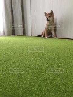 No.8801 犬