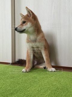 No.8800 犬