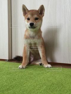No.8799 犬