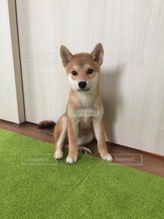 No.8798 犬