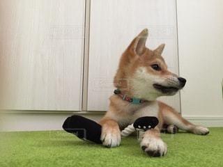 No.8806 犬