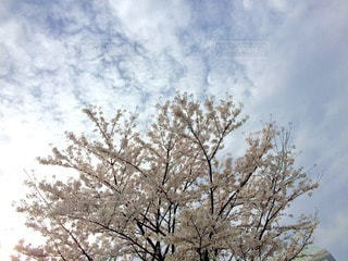 風景 - No.10753
