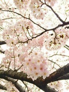 自然の写真・画像素材[10754]