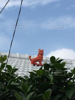 沖縄の写真・画像素材[241928]