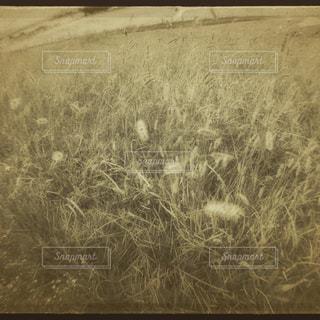 草原の写真・画像素材[243099]