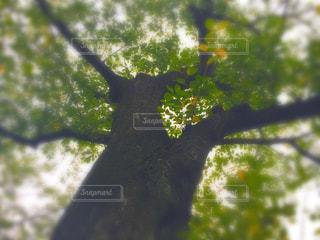 空の写真・画像素材[243106]