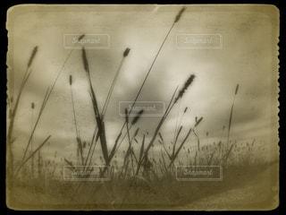 秋の写真・画像素材[243118]