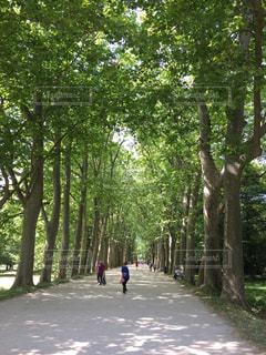 散歩道の写真・画像素材[243137]