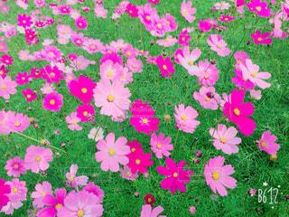 花の写真・画像素材[258053]