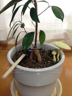 植物の写真・画像素材[242192]