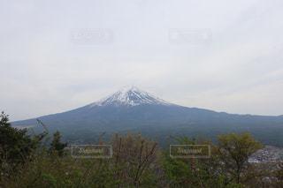 背景に山がある木の写真・画像素材[2277997]