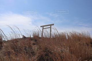 乾いた草原のクローズアップの写真・画像素材[2278069]