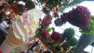 花のクローズアップの写真・画像素材[2278082]