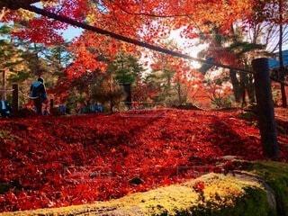紅葉の京都の写真・画像素材[3926951]
