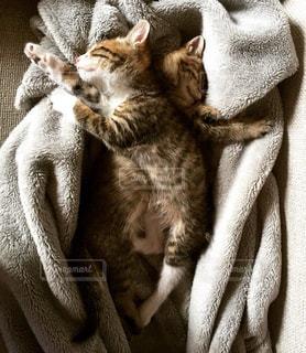 猫の写真・画像素材[242381]