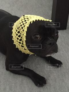 犬の写真・画像素材[242399]