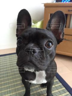 No.242570 犬