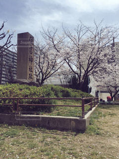 春 - No.242477