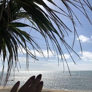 海の横にある砂浜のビーチでヤシの木のグループの写真・画像素材[1644549]