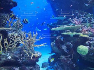 魚の写真・画像素材[242697]