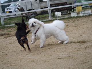 犬 - No.263769
