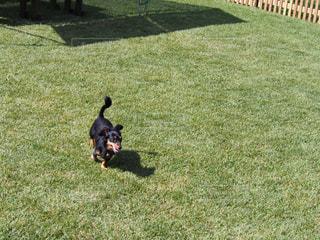 犬の写真・画像素材[263777]