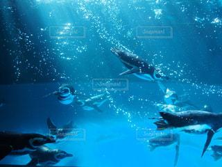 水族館の写真・画像素材[317522]
